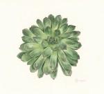 Plante grasse - 26x36 cm - 80 €