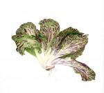 Salade - 20x20 cm - 70 €