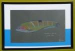 Girelle paon - Crayons de couleurs - Aôut 2011