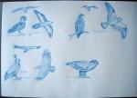 Croquis - Crayon bleu - Juin 2014