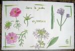Fleurs du jardin - Aquarelle et feutre 0.1 - Juillet 2014