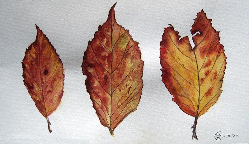 Feuilles d'automne - Aquarelle - Septembre 2015