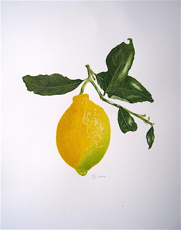 Citron jaune - Aquarelle - Décembre 2015