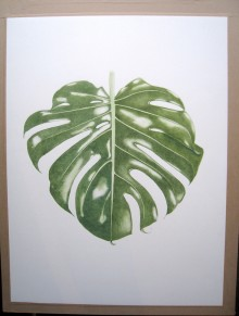 Monstera - Aquarelle - Avril 2017