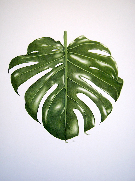 Philodendron monstera - Aquarelle - Mai 2017