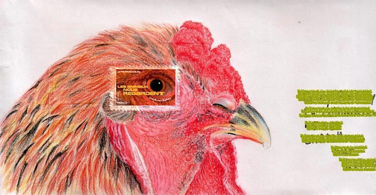 Coq Brahma perdrix doré- Crayons de couleurs - Aout 2017
