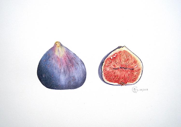 Figues violettes - Aquarelle - Septembre 2017
