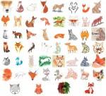 52 renards
